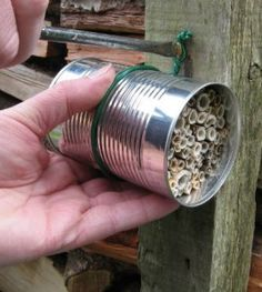 DIY Mason Bee House from dead plant stems and tin can