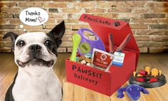 Pin for Later: This New Subscription Box For Dog Owners Is Tailored Just For Your Pup