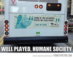 Think of the Hilarious Videos We Could Make!  funny bus ad for cat adoption -