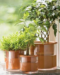 Self Watering Pot: consists of a a clear glass outer pot that gets filled with water, and a porous clay inner pot. The concept is that the plant absorbs the right amount of water it needs via the inner clay pot... They come in several sizes and range from $20 - $40 for a 3 set Herb Pot set.