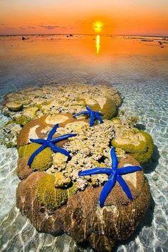 Starfish on the Beach - Lady Elliot Island, Great Barrier Reef, Australia http://tiredofthestruggle.weebly.com/