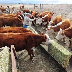 Feeding Antibiotics to Farm Animals May Worsen Climate Change