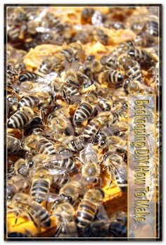 The survival of a colony of bees living in a bee hive depends on the queen bee. Without queen bee the hive will die. The hives queen is the only female bee that has fully developed reproductive organs. Starting A Beehive, Top Bar Hive, Types Of Bees, Health Food Shops, Nutrition Store, Bee Pollen, Clay Vase, Health Facts, Bee Keeping