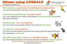 Více si o problematice idiomů najdete na našich stránkách. My se dnes zaměříme na idiomy, které obsahují zvířata.  #anglictina #idiomy #zvirata Birds Eye View, Idioms, Nice View, Nasa, Positivity, English, Let It Be, Animals, Languages