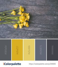 Color Palette Ideas from Yellow Flora Flower Image - Gelb Color Palette For Home, Color Schemes Colour Palettes, Grey Palette, Paint Color Schemes, Colour Pallette, Bedroom Color Schemes, Decorating Color Schemes, Grey Living Room Ideas Colour Palettes, Adobe Color Palette