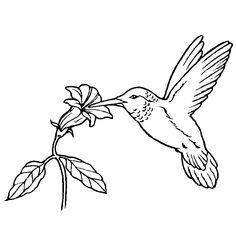 hummingbird coloring pages hummingbird sipping nectar