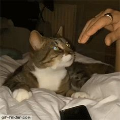 Cat demands to be stroked | Gif Finder – Find and Share funny animated gifs