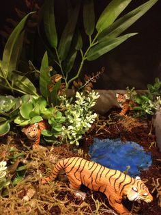 This is a close up that my son Cameron took if his diorama we made for his book report on tiger poaching . It was fun to combine our ideas !