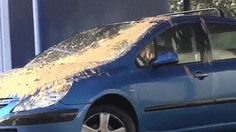 Car Wash Pigeon