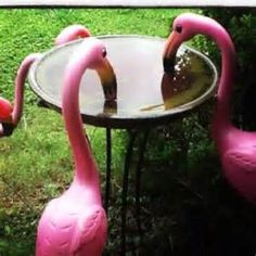 Lighted Pink Flamingo Outdoor Displays - Bing images