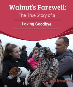 Walnut's Farewell: The True Story of a Loving Goodbye  When Mark Woods learned that his dog, Walnut, 18, must be put down because he had a horrible disease, he decided to take him for his last walk surrounded by many people and other pets.