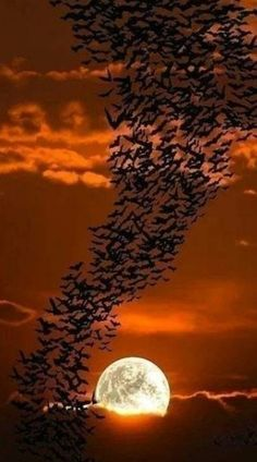 Best collection of most beautiful Moon pictures amazing photographs. These stunning moon photos are best to use as wallpapers or your cover photos. Beautiful Moon, Beautiful World, Beautiful Birds, Beautiful Images, Shoot The Moon, Moon Pictures, Belle Photo, Amazing Nature, Beautiful Landscapes