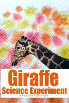 Fun! Giraffe science activity! Perfect for preschool, kindergarten, and even older kids learning about capillary action!