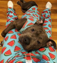 Necessities for warm cute dogs - Gloria Love Pets - There are so many kinds of dog products in the market, thousands of kinds. Today Gloria will help y - Cute Funny Animals, Cute Baby Animals, Animals And Pets, Strange Animals, Love Pet, I Love Dogs, Cute Pitbulls, Lorie, Cute Dogs And Puppies