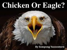 Chicken Or Eagle???