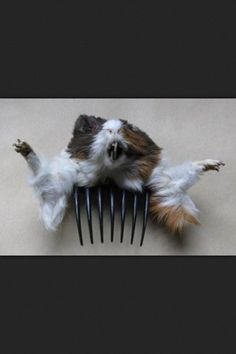 R Guinea Pigs Rodents 97 best Bad Taxidermy ...
