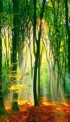 Beautiful spring sunshine filtering through the trees. Foto Nature, All Nature, Amazing Nature, Tree Forest, Magic Forest, Forest Light, Fantasy Forest, Tree Tree, Sun Light