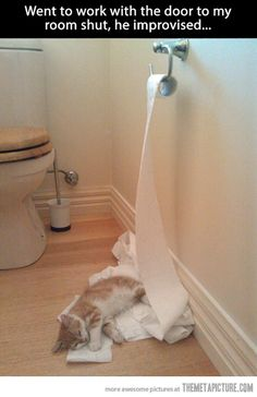 Attack Of The Funny Animals – 110 Pics,,The Little Kitty Sure Did Attack the Toilet Paper. I Love Cats, Cute Cats, Funny Cats, Funny Animals, Cute Animals, Baby Animals, Crazy Cat Lady, Crazy Cats, Humor Animal