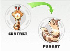 Sentret evolution