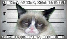 Grumpy Cat Pictures With Captions | Grumpy Cat Captions | Funny Cat Wallpapers, Pictures, Images and ...