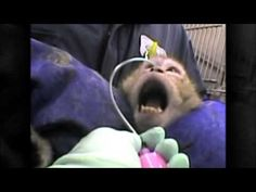One Minute of Reality: Animal Testing http://www.pawsforthenews.tv/1news/1featured-news/eleventh-hour-for-animals-exposing-the-taxpayer-funded-animal-torture-industry-inside-the-university-of-florida/ Paws for the News www.pawsforthenews.tv