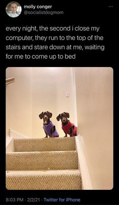 Another week, another fresh collection of doggo memes to satiate all your doggo meme needs. Doggo memes are the one thing that always puts a smile on our faces, and we know that it's the same for you. #dog #dogs #dogmemes #funny #funnymemes #memes #lol Dog Memes, Funny Memes, Hilarious, Boy Dog, Internet Memes, Animal Memes, Funny Dogs, Dog Training, Cool Girl