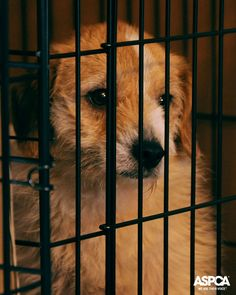 The ASPCA commends New Jersey legislators and Governor Chris Christie for enacting a measure to crack down on New Jersey pet stores that source puppies from inhumane puppy mills. Learn more about how you can take action here: http://www.aspca.org/blog/breaking-governor-christie-signs-new-jersey-bill-regulate-pet-stores
