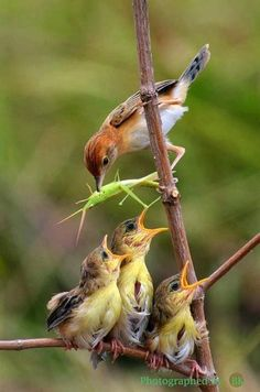 feeding chicks ... my parents never realized how lucky they were; they did their hunting of food at a super market.  NLP