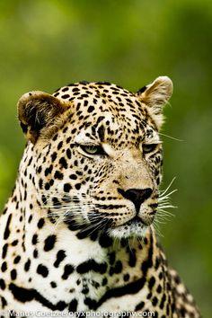 Nature  Animals | Tumblr  Wild  Forest