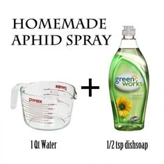Spray EASY homemade aphid spray that will cost you pennies! going to try it today! Found some on my tomato plants!EASY homemade aphid spray that will cost you pennies! going to try it today! Found some on my tomato plants! Garden Bugs, Garden Pests, Organic Gardening, Gardening Tips, Insecticide, Water Spray, Spray Can, Weed Control, Tomato Plants