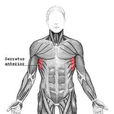 One of the most underrated, best-looking ab muscles that NO ONE talks about: the Serratus. They're the finger-like muscles that run diagonally along the top of the obliques. DB pullovers are one way to work them, along with the 5 oblique exercises here.