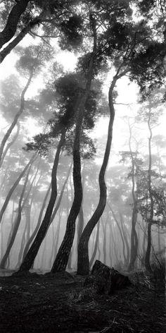 배병우 (1950~ )의 사진 한국의 미, 소나무 사진 배병우 1950년 전라남도 여수 출생 1974년 홍익대학교 미... Artistic Photography, Fine Art Photography, Nature Photography, Black And White Tree, Japan Painting, Dark Forest, Beautiful Places To Visit, Landscape Photographers, Beautiful Landscapes
