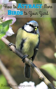 Free Image on Pixabay - Blue Tit, Bird, Blossom Blue Tit, How To Attract Birds, Villa, Backyard Birds, Garden Birds, Garden Pests, Little Birds, Wild Birds, Bird Watching