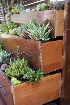Such a beautiful way to reuse a vintage hardwood dresser by turning it into a one of a kind succulent garden. The drawers are used as planters and the effect is stunning.