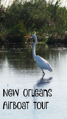 Airboat tours New Or