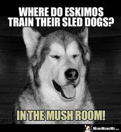 hunde jokes