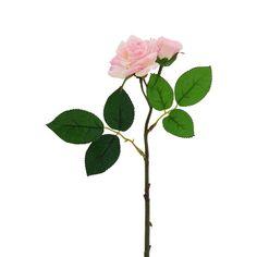 Tige courte rose spray