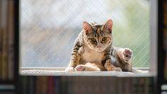 windowsill cat watching you best free hd wallpaper