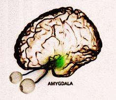 Stess och vår hjärna