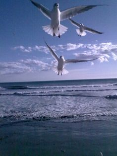 alassio ♡ gulls in the sky.. free of the life