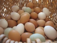 Healthy Homesteading Ideas  The beautiful colour in egg shells!