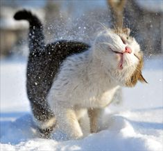 Shaking off the snow...