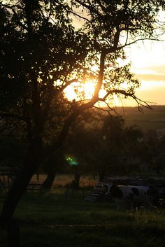 Abend by Daniela 28, via Flickr