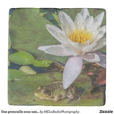 Une grenouille sous une fleur de nénuphar Photos, Painting, Animals, Art, Coasters, Flowers, Animales, Pictures, Animaux