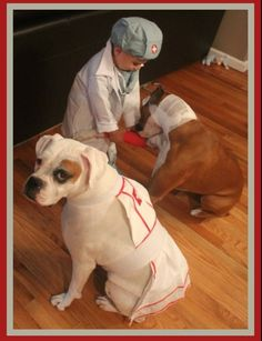 The doc is helping the boxer. Www.dailyboxer.com