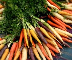 gorgeous organic carrot colors!