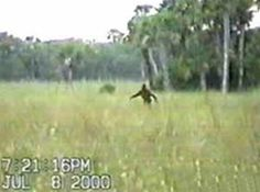 Bigfoot caught on video near Colorado Springs (2000)