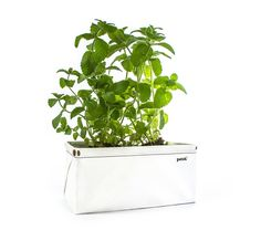 11 Holiday Gifts for Gardeners