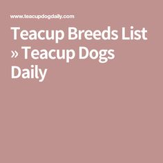 Teacup Breeds List » Teacup Dogs Daily