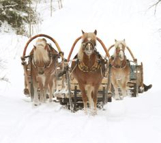 Finnhorses Halla-Ukko, Usvayön Helmi and Penan Huila taking the children and seniors to sleigh rides. © Suomen Työhevosseura.